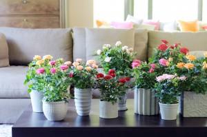 Cuidados Florales
