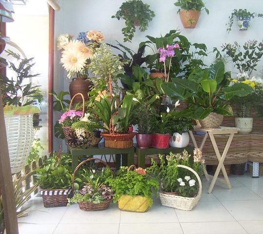 Blog floristeria malayerba flores plantas rosas todos sus secretos - Plantas en el interior de la casa ...